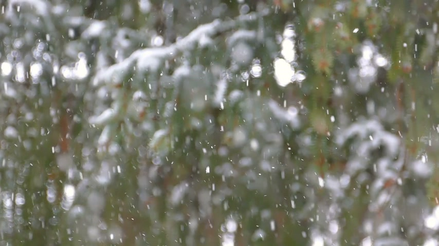stromy : Snowing with spruce fir trees, snowflakes on the mountain, winter season slow motion