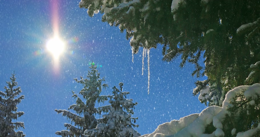 сосулька : Winter landscape with spruce fir trees and icicles, blue sky and snowflakes on the mountain Стоковые видеозаписи