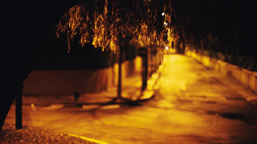 Night view of a quiet street through the foliage of a tree. Willow branches sway in the wind. The yellow light of the lanterns illuminates the road. Car headlight light. Wideo