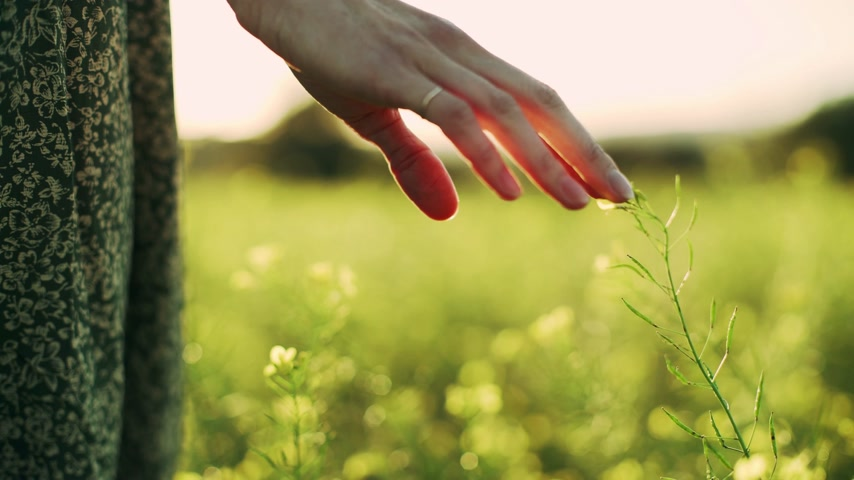 Girl in green dress standing on the field fool of blooming yellow flowers. Closeup to the hands touching flowers. Golden light in idyllic landscape. Fingers touch flowers. Wideo