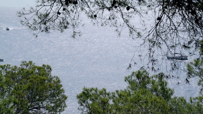 Small boats and yachts in the azure sea. View from the rocks with the pines. Boats sailing in the blue sea.