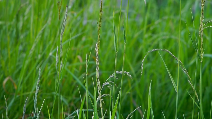 környezeti : green grass close up  in gentle motion