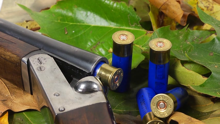 av : Shotgun, shells and autumn leaves Stok Video