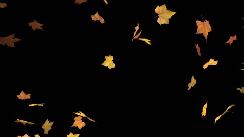 autumn : falling leaves - masked 3d animation loop