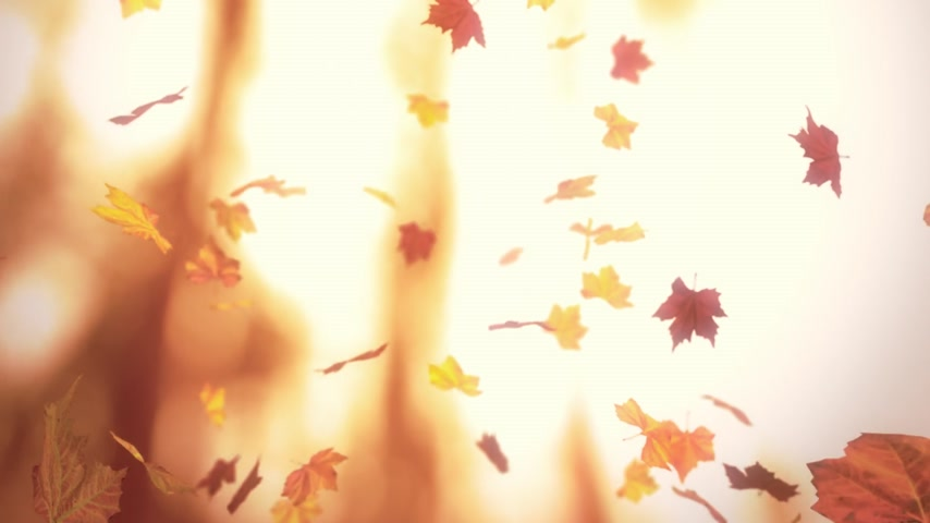 folhas : Falling autumn leaves - loopable cg animation blurred background