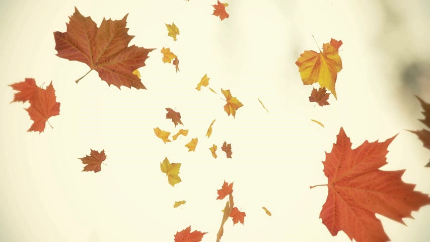 listki : Autumn spinning and falling leaves backgrounds - loopable animation