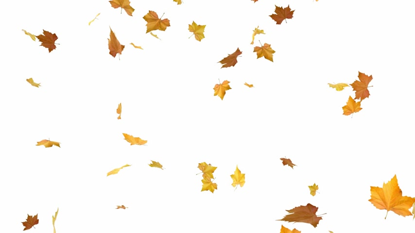 autumn : Isolated autumn leaves on a white background - loopable cg animation