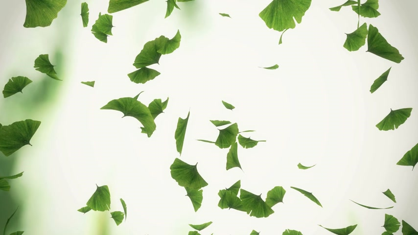 ginkgo leaf : Falling ginkgo leaves looped animation