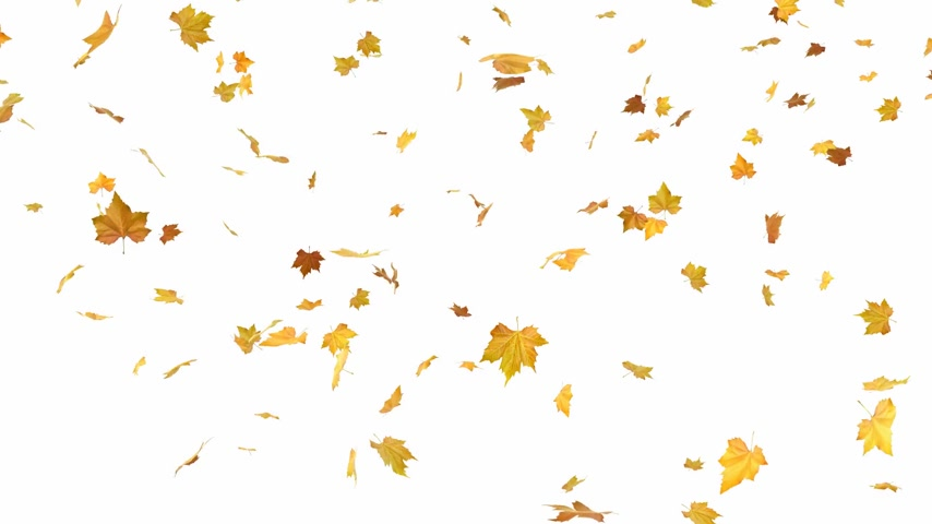 autumn : Isolated autumn leaves - loopable masked cg animation
