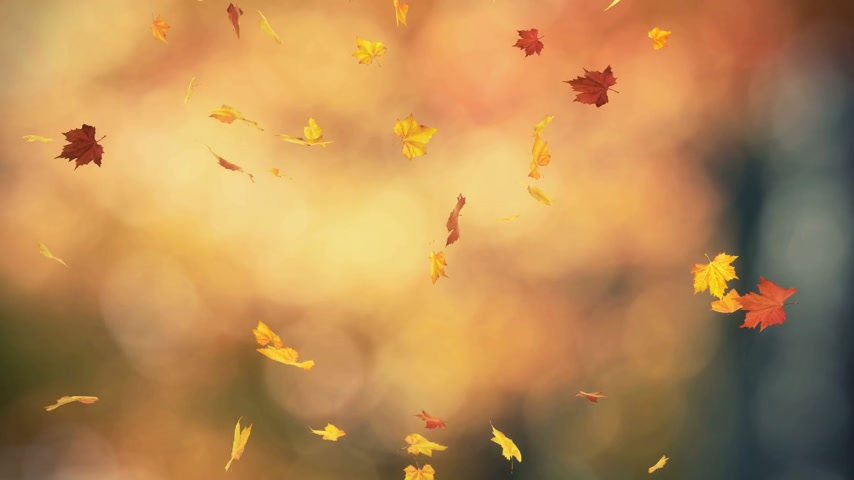 folhas : Autumn spinning leaves backgrounds - loopable animation