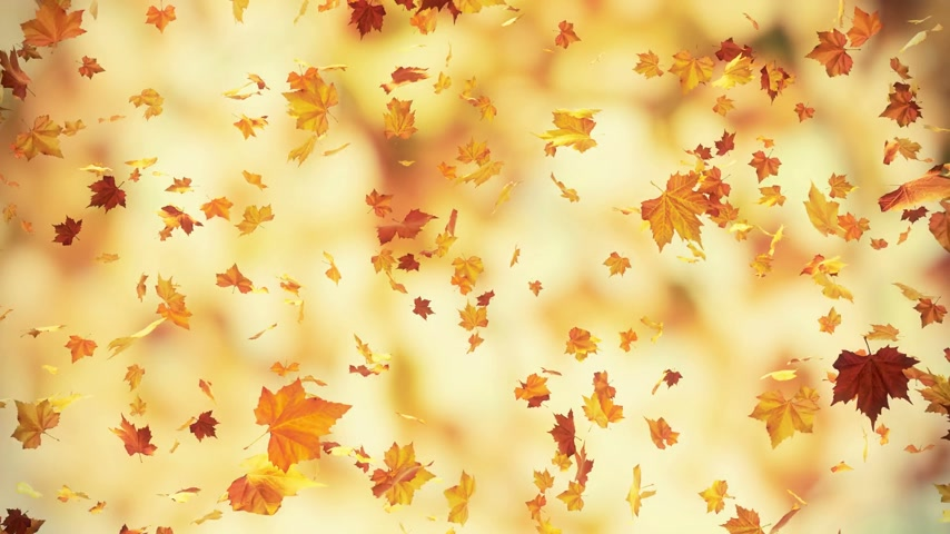canadian maple leaf : Autumn falling leaves - loopable 3d backgrounds