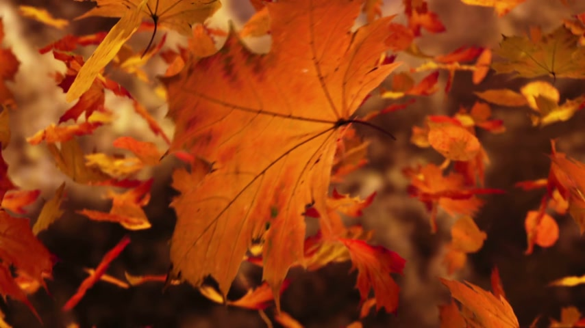 listki : Close up on falling autumn leaves