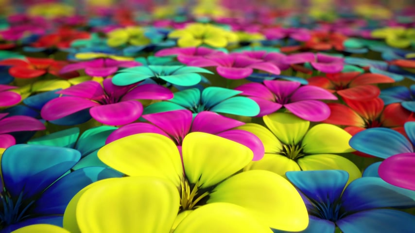 natura : Camera is flying above abstract field of colorful flowers that can represent beauty of the nature, beginning of life or happiness. Animation is loopable.