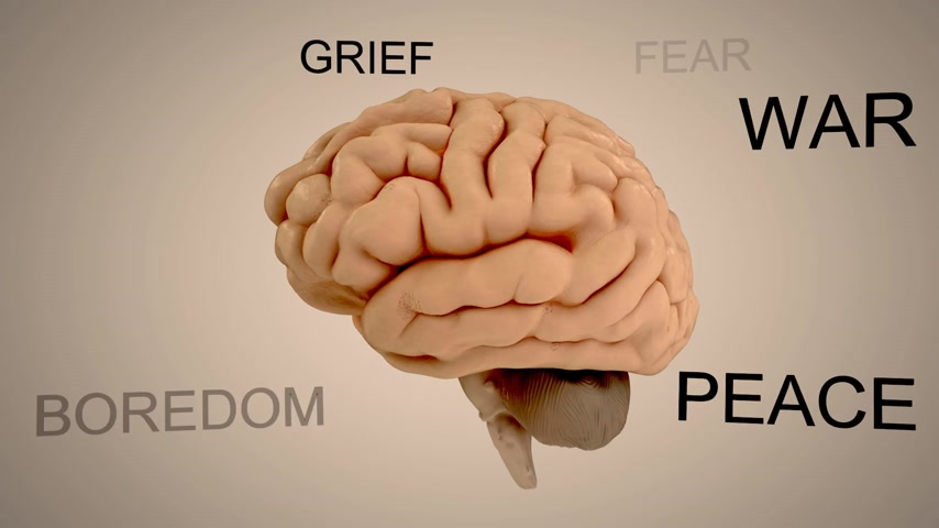 anatomia : Emotions, like fear and love, are carried out by the limbic system, which is located in the temporal lobe.