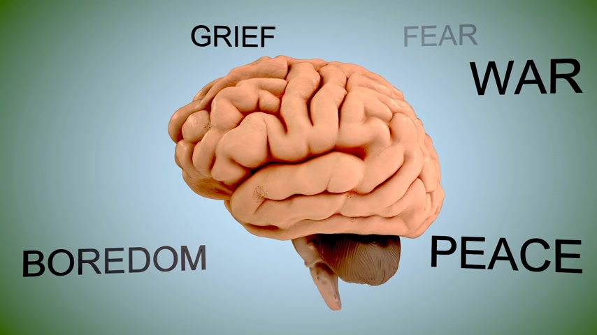 испуг : Emotions, like fear and love, are carried out by the limbic system, which is located in the temporal lobe.