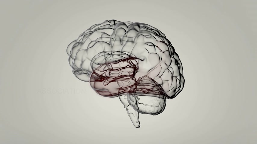psikoloji : The brain is most complex organ in the body. Animation shows what certain parts of brain do.