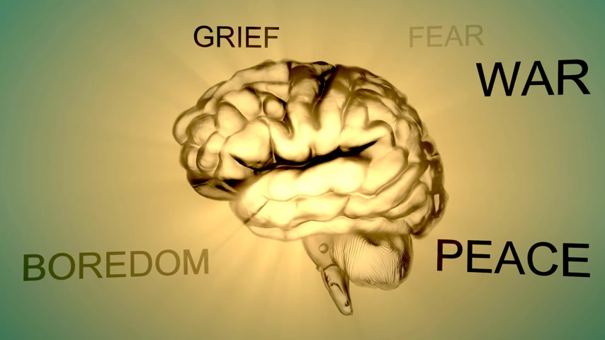 miłość : Emotions, like fear and love, are carried out by the limbic system, which is located in the temporal lobe.