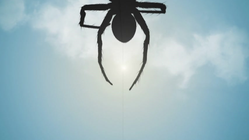 ловушка : One big venomous spider climbing up a thread of its web. Spider silhouette at blue sky.