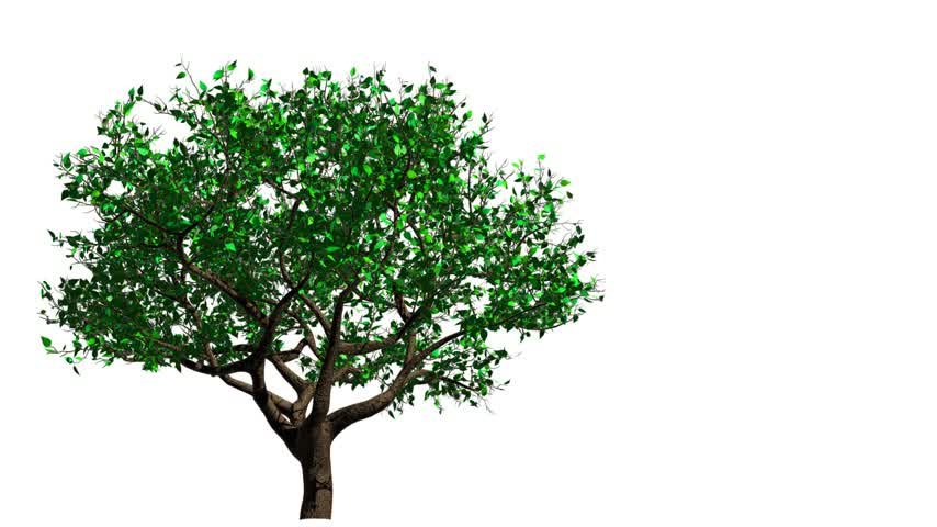 yay : Tree. From Spring To Autumn. 3D Animation.