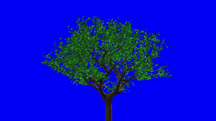 ormanda yaşayan : Leaves Appear On The Tree, They Turn Yellow And Then Fall Off. Blue Screen.