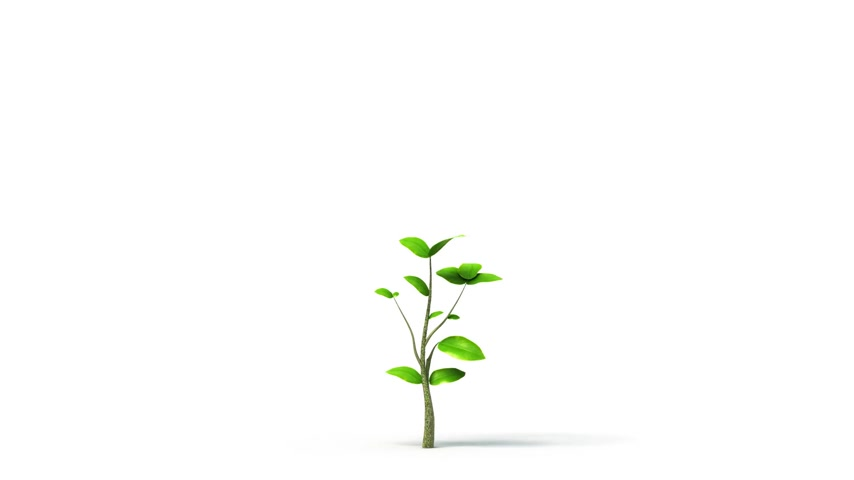 drzewo : Growing tree on white background, isolated object.