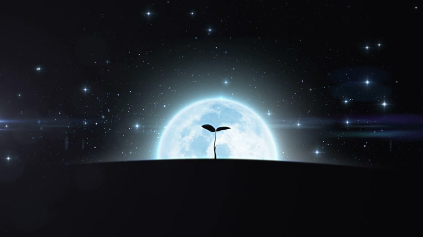 büyüyen : Tree Growing under the New Moon Rising. HD 1080. Stok Video
