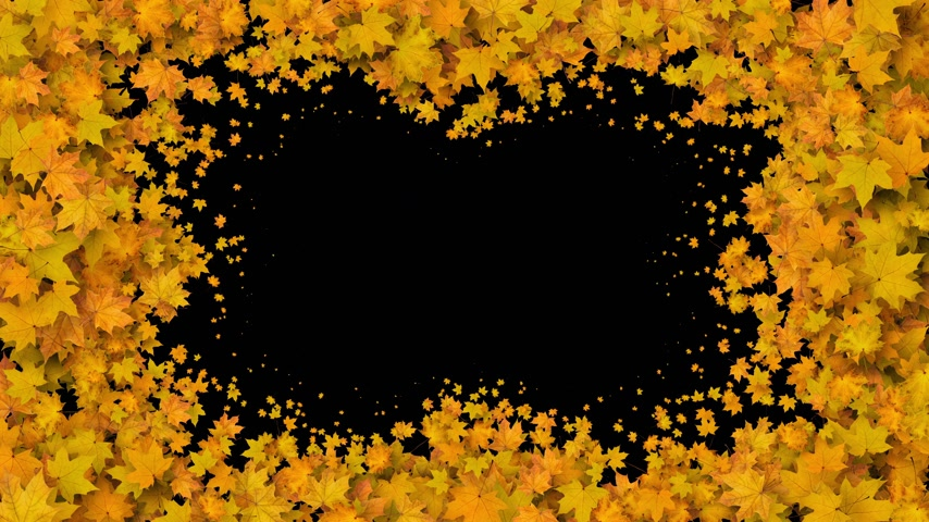 Beautiful Yellow Maple Leaves Covering the Screen. Growing Foliage Animation with Alpha Matte. Useful for Transitions. Spring Nature and New Life Concept. 4k Ultra HD 3840x2160