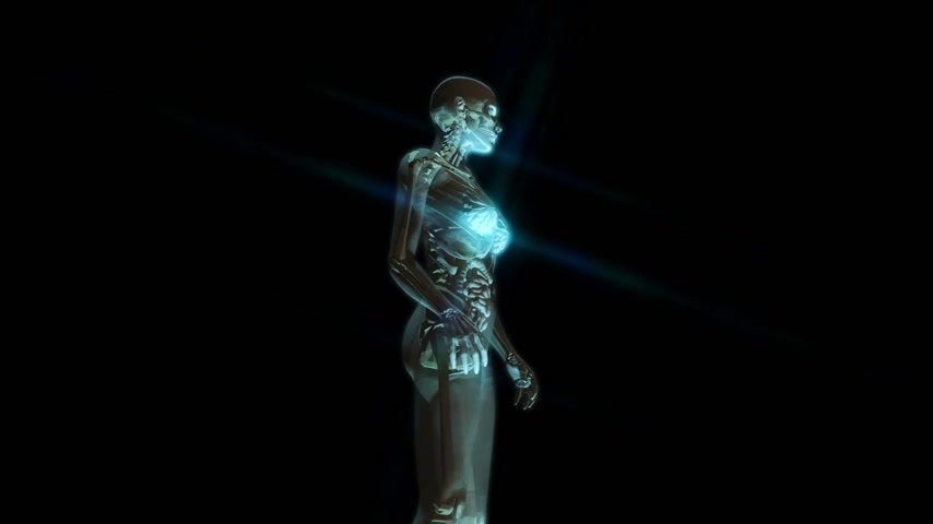 scull : Digital 3D animation of the female human anatomy