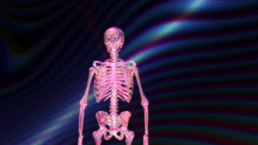 scull : Digital 3D animation of a human skeleton