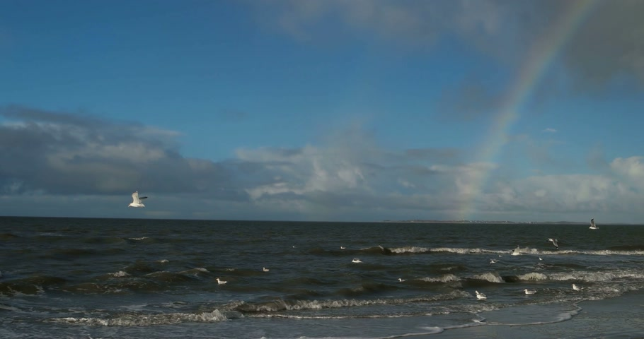 aves marinhas : Birds with Rainbow on North Frisian Island Beach of Amrum in Germany