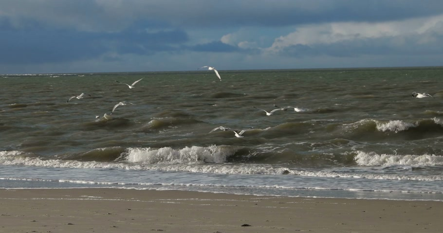 морских птиц : Birds on North Frisian Island Beach of Amrum in Germany Стоковые видеозаписи