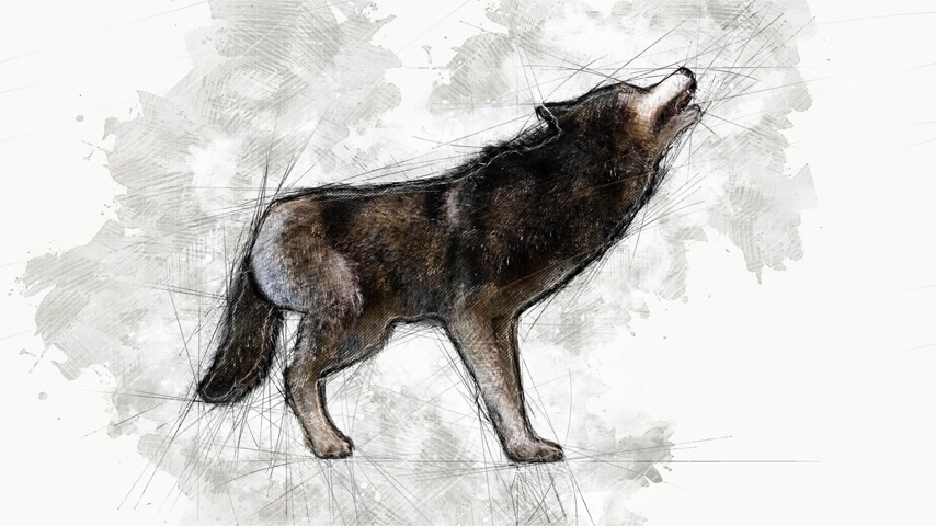weeping : Digital Animation of an artistic sketch, based on a self-created 3D illustration of a wolf, model release or property release not required. Stock Footage