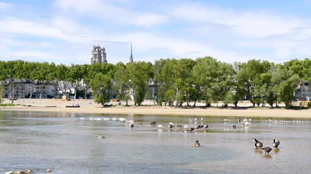 In France, Orleans is a charming town crossed by the Loire river. View of the river with animals in the foreground. The famous cathedral is in the background.