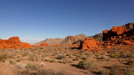 kaktusz : Valley of Fire National Park, Nevada in 4k.