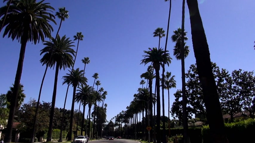 Калифорния : Palm trees in Beverly Hills California LOS ANGELES