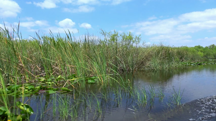 Майами : Amazing Airboat Ride through the Everglades of South Florida