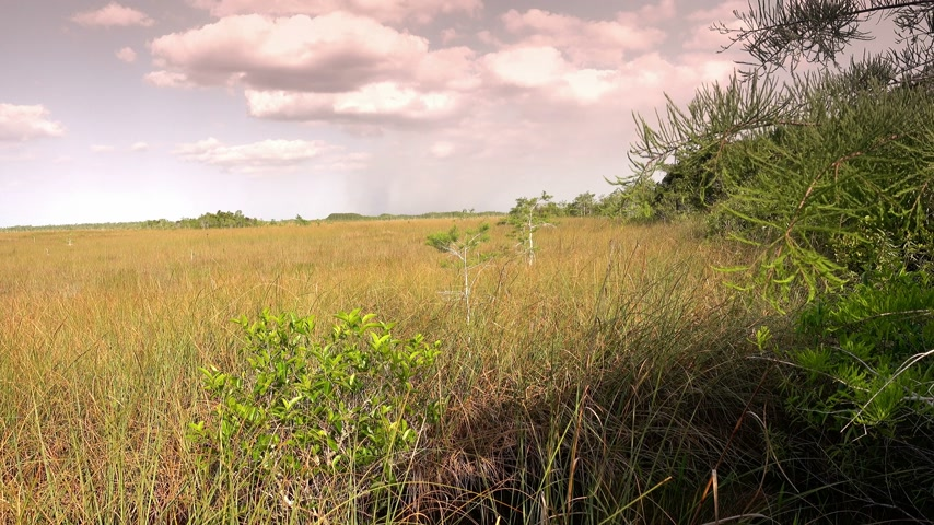 frisson : La belle nature du parc national des Everglades