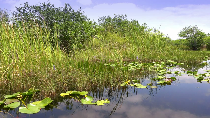 krokodil : The amazing nature of the Everglades in Florida