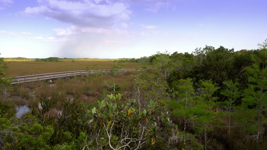 frisson : Marcher à travers le Parc national des Everglades en Floride