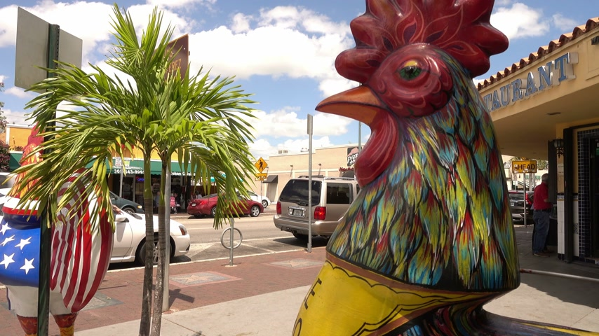 espetacular : Cock statue on Calle Ocho Miami Little Havana Stock Footage