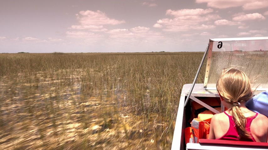 réptil : Thrilling Airboat Ride through the Everglades near Miami Florida