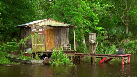pantanal : Wooden hut in the swamps Stock Footage