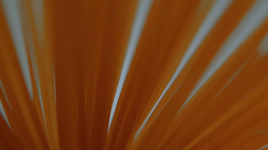 limão : Amazing close up shot of Spaghetti Pasta Stock Footage