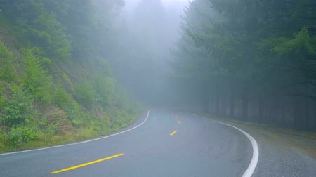 кедр : Lonesome road in the mist leading through the Redwoods National Park Стоковые видеозаписи