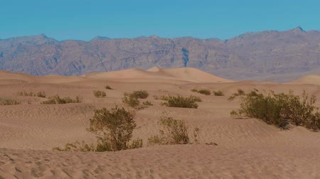 great indian desert : Death Valley National Park - the Mesquite Sand Dunes Stock Footage