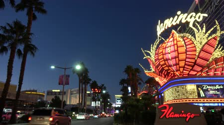 neon lights : Flamingo Hotel and Casino Las Vegas - beautiful evening view - USA 2017 Stock Footage