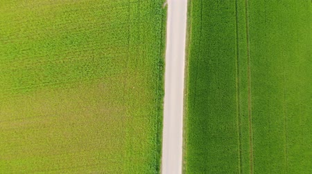rape : Grasslands and country fields from above - aerial drone flight Stock Footage