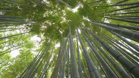maravilhoso : Bamboo Forest in Japan - a wonderful place for recreation - TOKYO  JAPAN - JUNE 17, 2018