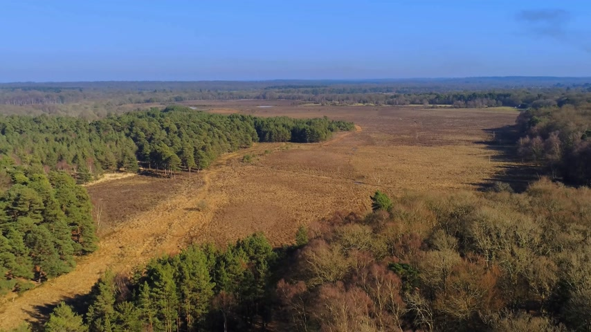 clareira : New Forest National Park in England from above Vídeos