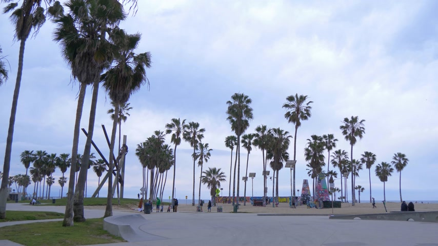 barışçı : Palm trees at Venice Beach oceanfront - CALIFORNIA, USA - MARCH 18, 2019